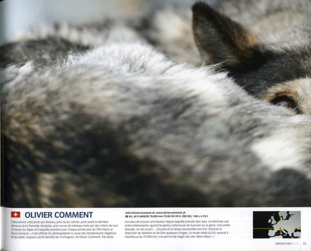 Olivier Comment photo de chien de traineau parue dans magazine Nikon Pro - TransAlp Vaudoise Suisse