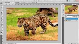 tutoriel_photoshop_ameliorer_nettete_image_gratuit.jpg