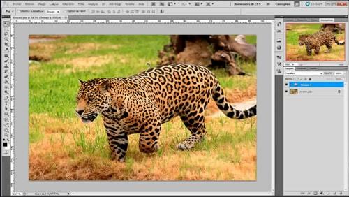 Tutoriel Photoshop : comment améliorer la netteté des images