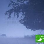 Concours Photo pour la 3ème édition du Festival de la Photo animalière de Rambouillet