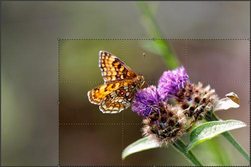 8 conseils pour traiter vos images nature avec DxO Optics Pro : le tutoriel pas à pas