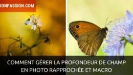 Comment gérer la profondeur de champ en photo rapprochée et macro