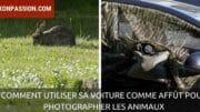 Comment utiliser sa voiture comme affût pour photographier les animaux