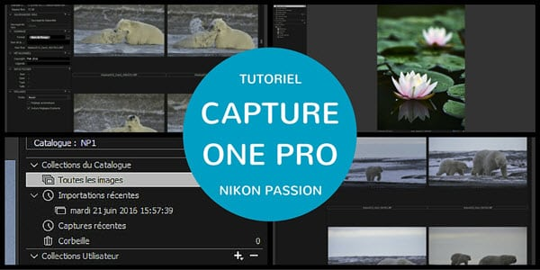 Tutoriel Capture One Pro : quel mode choisir entre catalogue et session