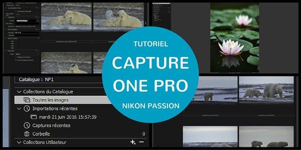 Tutoriel Capture One Pro : quel mode choisir entre catalogue et session
