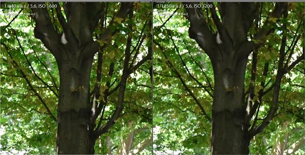 Test Nikon D7500 comparaison 1600 - 3200 ISO