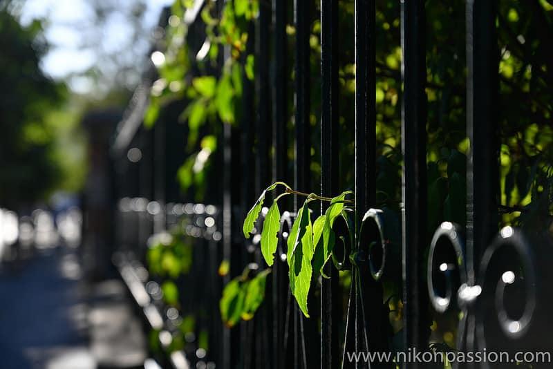 Test Nikon Z7 + 24-70mm f/4