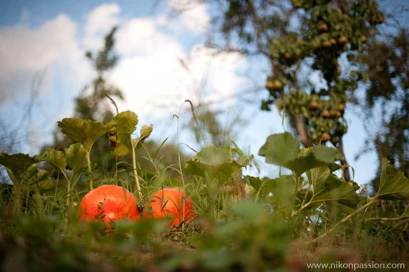 Comment faire des photos de légumes