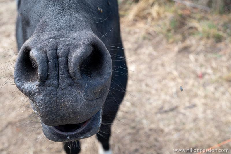 Photo d'âne vu de près