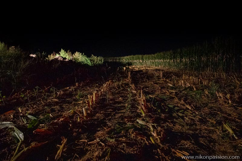 Ensilage du maïs la nuit en Meuse