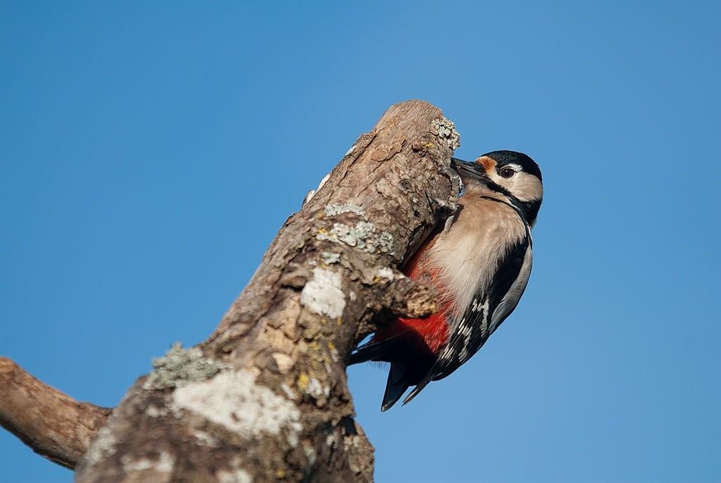 Comment photographier les oiseaux à la mangeoire