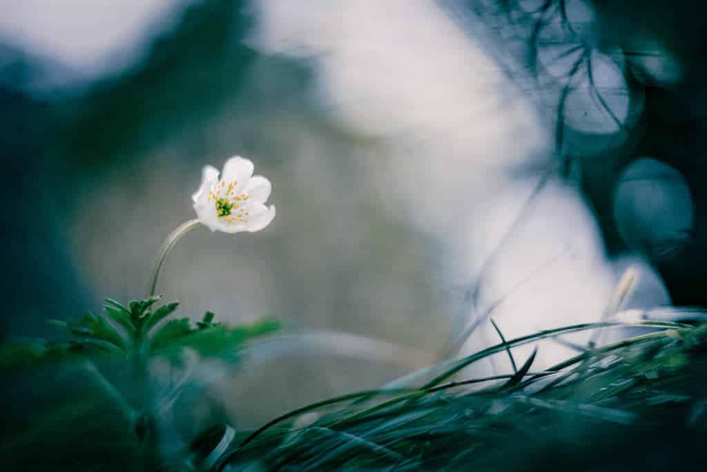 Comment photographier les fleurs en gros plan
